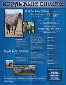 Royal Blue Quixote